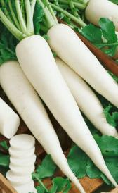 raw white icicle radishes